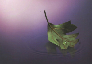 Bereavement Leaf